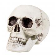 Totenkopf mit beweglichem Kiefer 20x15cm
