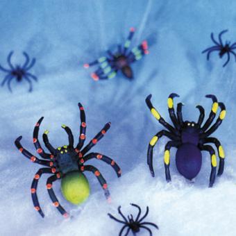 Weißes Spinnennetz + UV-Spinnen