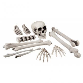 12 Skelett Knochen